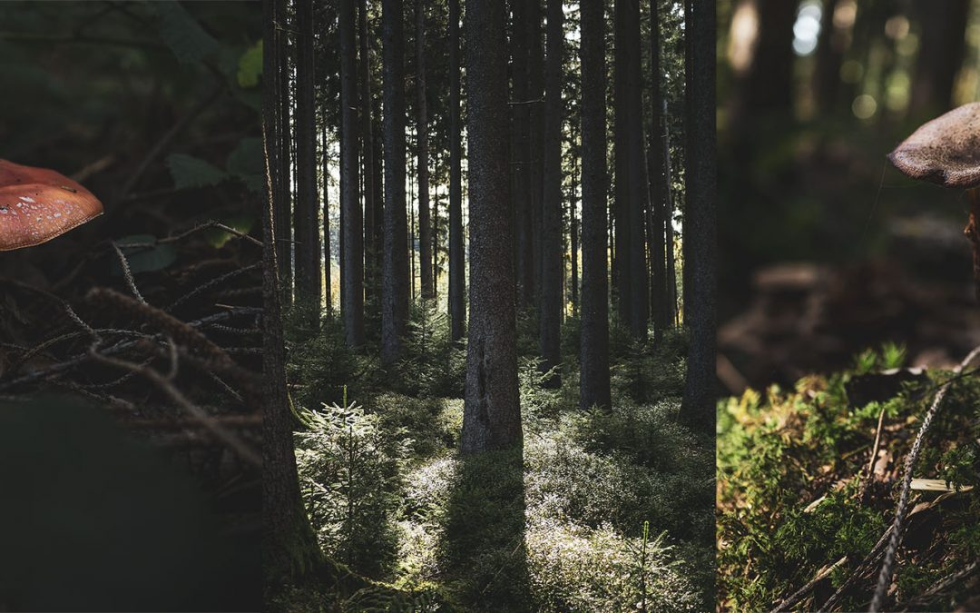 Der Waldspaziergang ist Wohlbefinden