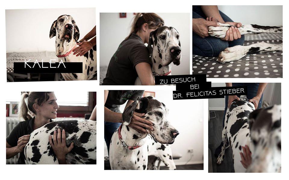 Tier Fotografie Hunde