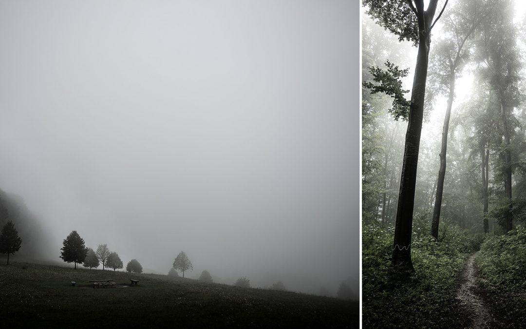 Der Wald – Landschaftsfotografie im Nebel
